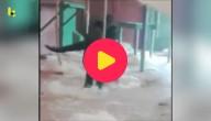 een dansende gorilla