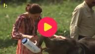 Prinses Kate voedert de olifant