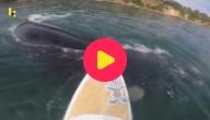 walvis zwemt voorbij