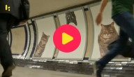 katten in de metro
