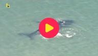 Babywalvis redt mama