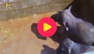 olifanten zwembad