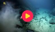 zeebergen hawaii