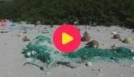 Karrewiet: Meest vervuilde eiland