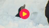 sneeuwrecord ijsland