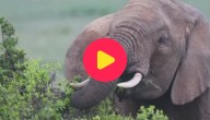china ivoor