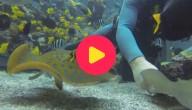kw_vissen zoo