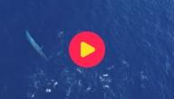 Zeilrace tussen walvissen