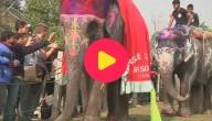 Karrewiet: Olifantenfestival in Nepal