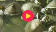 KRW_WEB_schildpadjes