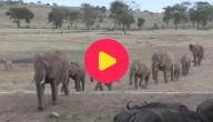 Karrewiet: Dieren tellen in Kenia