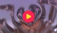 dodelijke spin