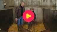 Karrewiet: het Menapische varken