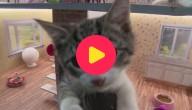 Karrewiet: Televisie over katten