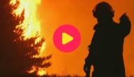 bosbrand Chili