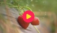 Fruit kopen, niet plukken