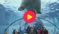 Karrewiet: Hartjes in de zoo