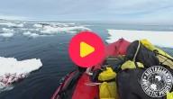 pinguin op boot
