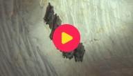 Karrewiet: Vleermuizen tellen