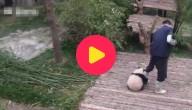 Karrewiet: Panda zoekt speelmaatje