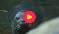 zeehonden vrijgelaten OKOK