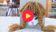 Karrewiet: Katten met een pruik!