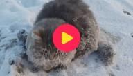 Karrewiet: Kat vastgevroren in ijs