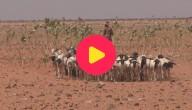 Karrewiet: droogte in Oost-Afrika
