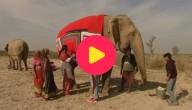 Karrewiet: Truien voor olifanten