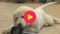 Karrewiet: Hond in de klas