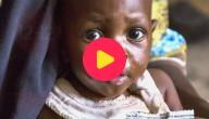 Karrewiet: Stop de honger