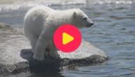 KW_ijsbeer