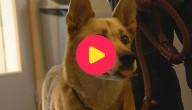 KArrewiet: zieke huisdieren