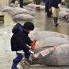 Een jongen bekijkt de tonijnen op de veiling