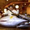 De superdure tonijn