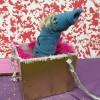 En als kers op de taart zong de Mierifant het grote verhuislied!