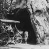 Het gat in de boom was bijna 200 jaar oud!