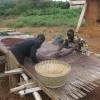 De bruine bonen moeten nu goed drogen. Dat gebeurt door ze op grote houten tafels te leggen in het zonnetje.