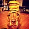 Hamburgers...