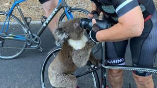 Koala klimt op fiets en drinkt drinkfles helemaal leeg