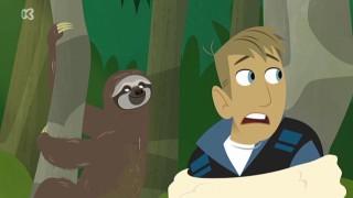 Kratts in het wild: Oerwoud stoofpot