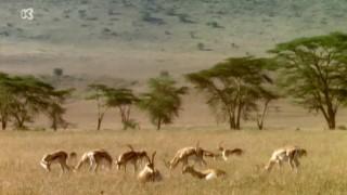 De wereld rond met Kaatje: Kenia