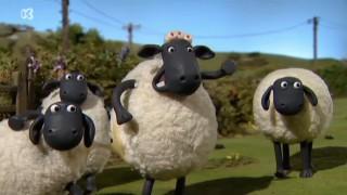 Shaun het schaap: Echte plakkers