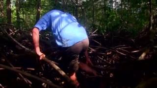 Freek in het wild: Mangrovebos en boa