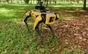 Karrewiet: Robothond tegen corona in India