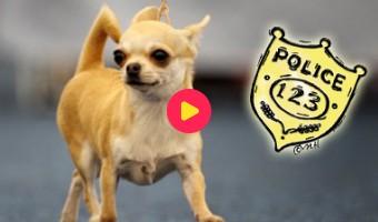 Grappige politiehond