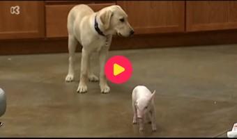hond en varken samen