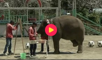 olifant maakt schilderijen
