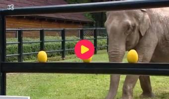 EK-olifant