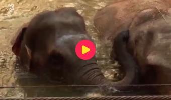 Op stap met de olifanten